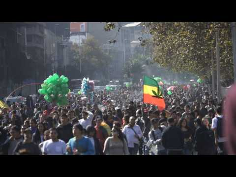 Thousands march in Chile for legal cannabis cultivation