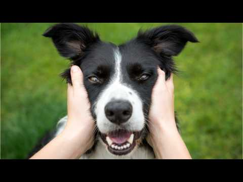 Where Did Dog Breeds Get Their Names From?