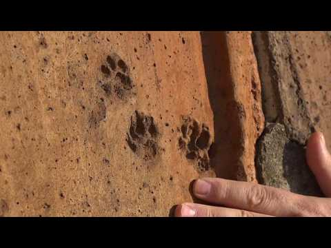 Hundreds of animal footprints found on Florence's medieval cathedral roof