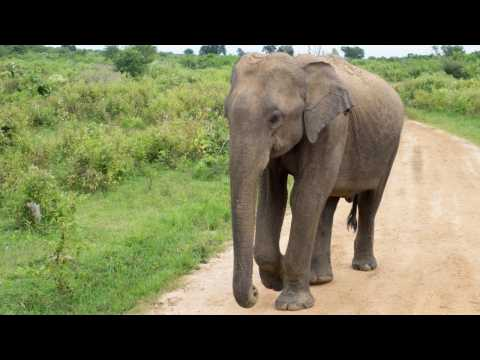 How This Rescue Worker Saved A Baby Elephant Hit By A Motorcyle