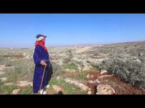 Palestinian olive growers denounce felling of more than 300 olive trees by the Israeli army