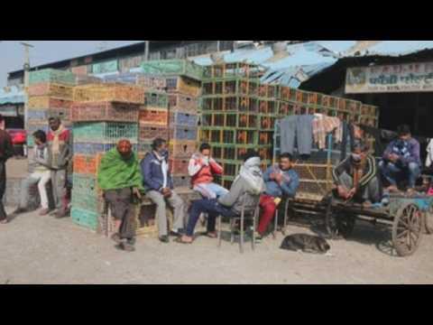 New Delhi poultry market shut amid bird flu fears