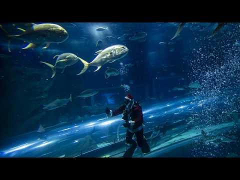 Diving Santa Claus brings festive spirit to Rio de Janiero aquarium