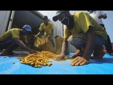 Sri Lanka Customs seized illegally imported turmeric