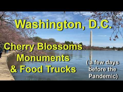 washington dc before coronavirus pandemic lockdown, cherry blossoms and monuments on the tidal basin
